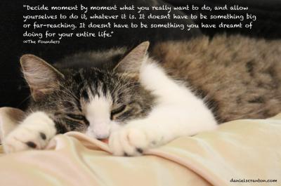cat napping taking a nap spiritual quote daniel scranton danielscranton.com