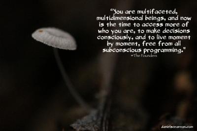 mushroom up close the founders quote daniel scranton